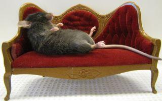 Couch Potato Mouse